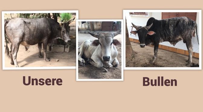 3 Bullen zum Fest